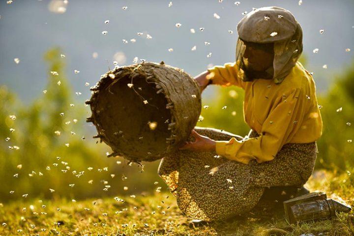 'Honeyland', la gran película de la que nadie está hablando en los Oscar
